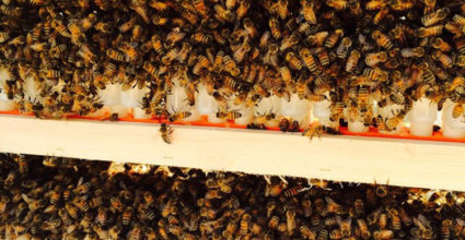 The Busy World of Beekeeping