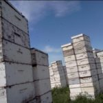 Hives in Montana