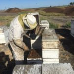 Working bees 2