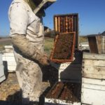 Working bees 3