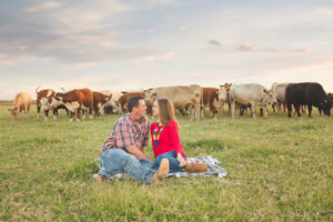 couple sitting on grass with cattle in the background